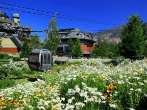 heavenly gondola flowers
